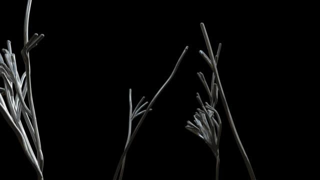 B/W, CGI, Chrome strains growing like plant roots against black background