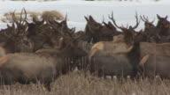 Cineflex Elk 02