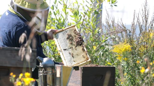 Cinemagraph - biodlare arbetar och inspektera Hive