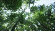 Circling shot of tropical canopy.