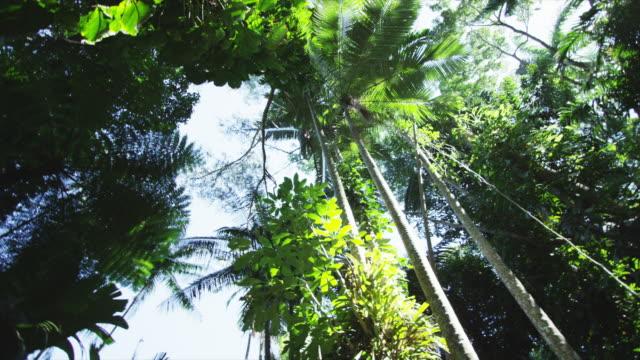 Circling shot of tropical canopy