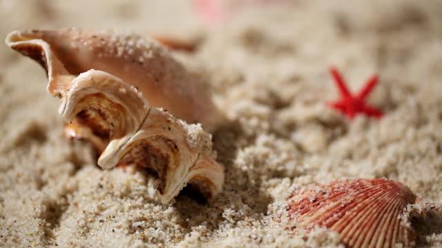 ECU R/F Clam and starfish lying on sandy beach / Seoul, South Korea