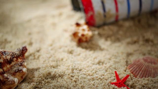 ECU PAN Clam and starfish lying on sandy beach / Seoul, South Korea