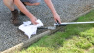 Cleaning hedge trimmer.