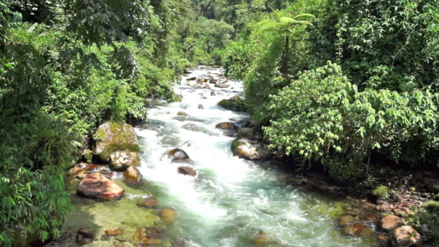 A clear, fast moving river flows through the jungle in Myanmar