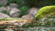 HD-SLOW-MOTION: Clear Stream