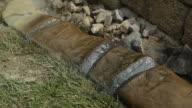 Clearcoat sprühen konkrete Lawn/Landschaft Einfassung