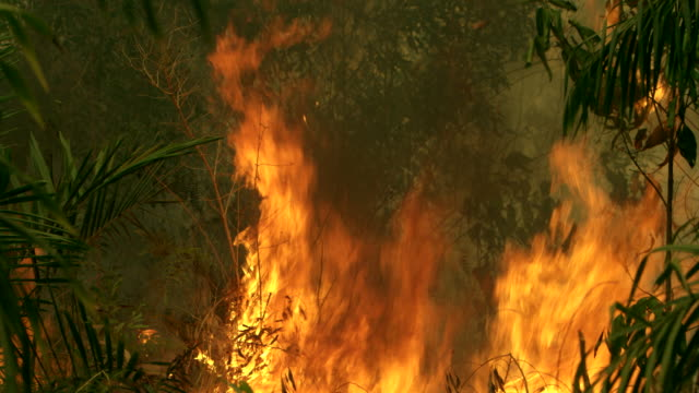 Climate change. Forest fire burning video Indonesia