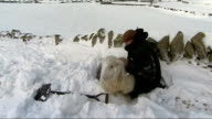 Climate change warning as freezing conditions continue WALES Llanfairfechan Various shots of shepherd Gareth Wyn Jones digging stranded sheep out of...