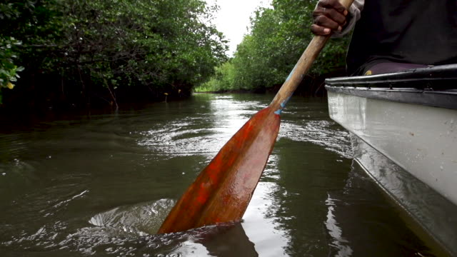 Close on wood paddle in mangroves, low high speed