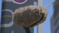 Close shot of a microphone boom.