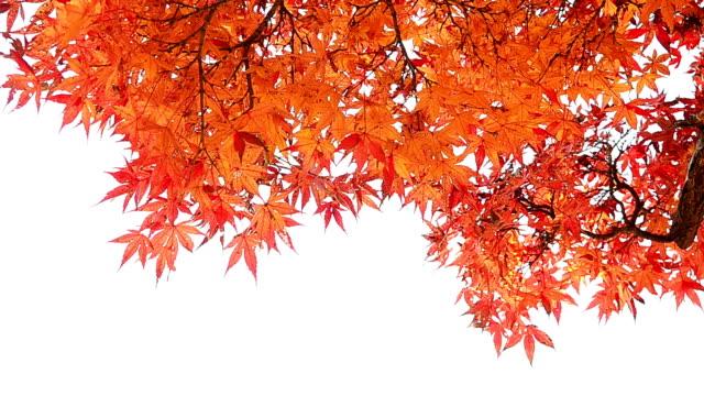 Close Up Autumn Background Isolated On White