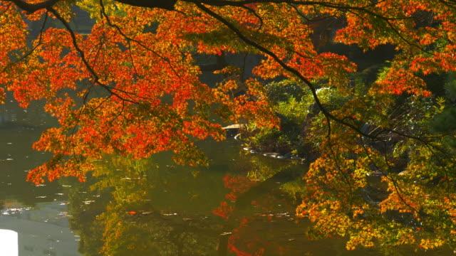 Close up autumn leaf in Hibiya Park