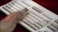 Close up baboon paw pounding on keyboard