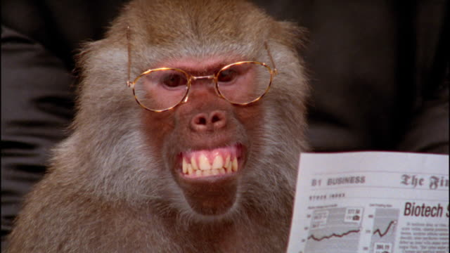 Close up baboon wearing eyeglasses / holding financial section of newspaper and making face / zoom out to medium shot zoom in