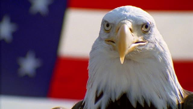Bald eagle head front - photo#21