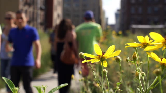 Close up flowers, Highline walkway with out of focus pedestrians