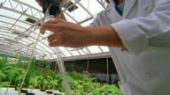 Close up hands tilt up to low angle Asian female technician measuring roots of plant in green house