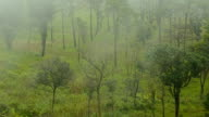 close up : Moving Mist over  forest