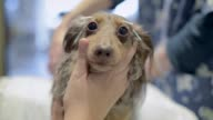 Close up of a dog receiving acupuncture treatment The number of pet dogs in Japan has been increasing steadily to 115 million animals almost onefifth...