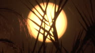 Close up of a low orange sun behind silhouetted leaves