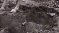 Close up of a markhor's hooves as it negotiates a rocky mountainside. Available in HD.