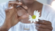 Close up of Black woman pulling petals off daisy