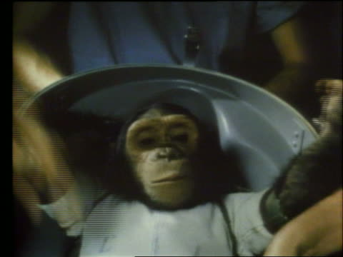 close up of chimpanzee astronaut