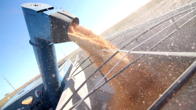 Close up of Combine Harvester Loading Corn Into Truck Trailer