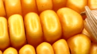 HD DOLLY: Close Up Of Corn Grains