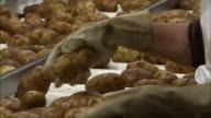 Close up of factory workers inspecting potatoes moving along a conveyor.