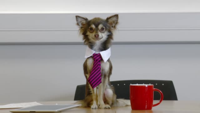 Close up of group of people have meeting with office dog