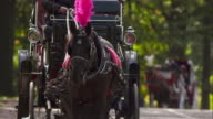 Close up of horse wearing pink feathered harness pulling carriage in Central Park in slow motion