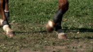 Close up of HORSEs legs WALKING BY