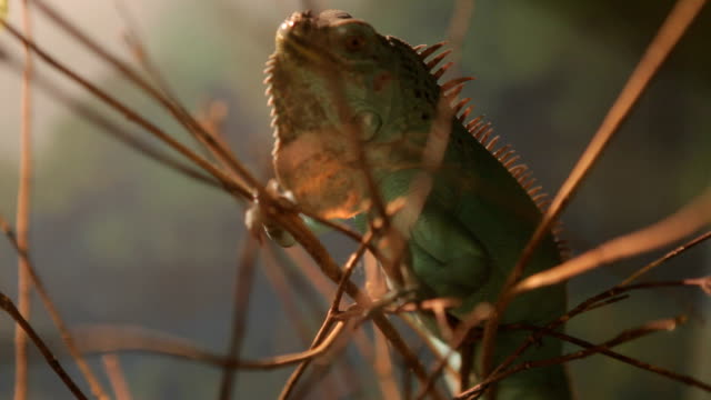 Close up of lizard on the tree