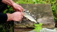 Close up of mans hands cleaning fish