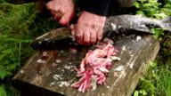Close up of mans hands cutting off fish head