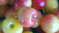 Close up of Rainier Cherries: the fruit are turning on a display