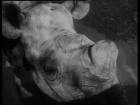 B/W close up of rhinoceros