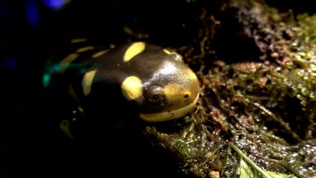 Close up of Salamander