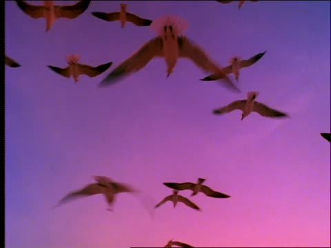 close up of seagulls hovering in sunset sky