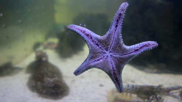 close up of starfish