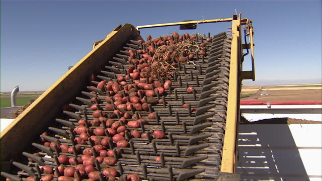 Close up of the combine's arm transferring the potatoes to the truck.