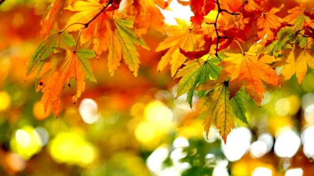 close up of yellow leaves in forest