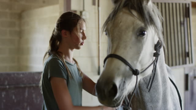Close up panning shot of girl brushing horse / Lehi, Utah, United States