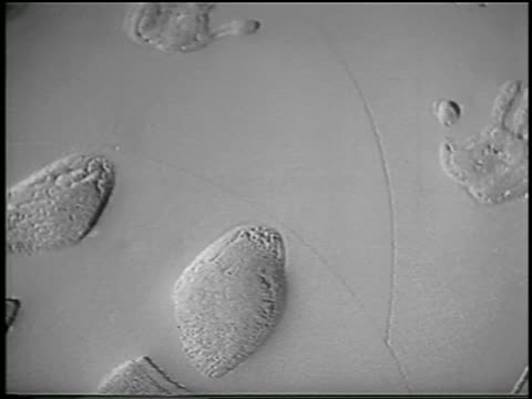 B/W 1956 close up Rock Hudson's handprints footprints in wet cement in front of Grauman's / Hollywood