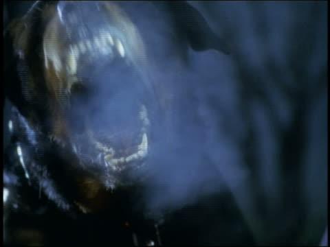 close up rottweiler barking at camera at night / steam coming from mouth