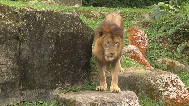 Close Up Shot Lion