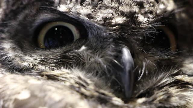 Close up shot of owl