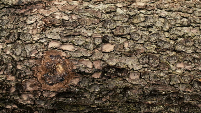 Close up shot of tree bark. Red Epic